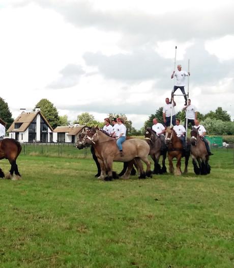 Belgische trekpaarden stelen show op Oogstfeest in Kaatsheuvel