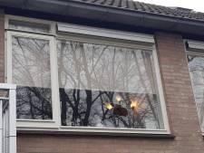 Waalwijkse vrouw gewond nadat Tilburger haar ruit ingooit
