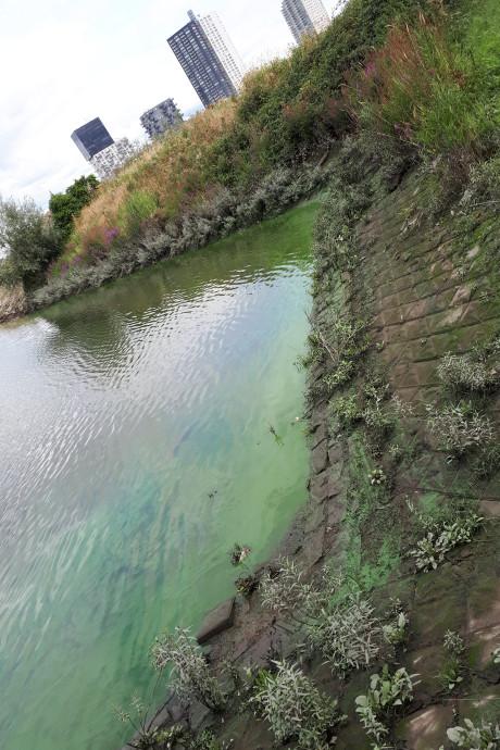 Groen goedje is blauwalg in haven Spijkenisse