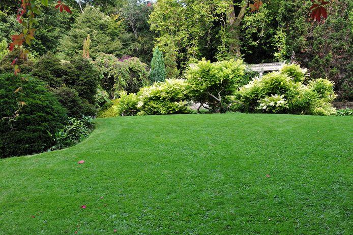 Steeds meer Nederlanders hebben een grote tuin.