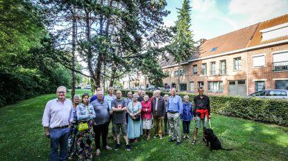 """Bewoners Rustenburgwijk klagen over bomen: """"Stadsbestuur moet beloftes nakomen"""""""