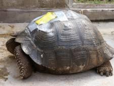 Man krijgt 10.000 euro boete voor aanrijden schildpad