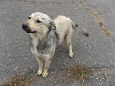Strenger toezicht op loslopende  honden in Waalre