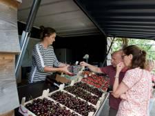 'Eigen fruit eerst': Neder-Betuwe komt met nieuwe regels voor fruitstalletjes