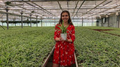 """'T Groen Beleven roept op om plantjes te schenken aan rusthuisbewoners: """"Opbrengst gaat naar goede doel"""""""
