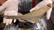 Douane ontdekt 1.200 kilo vinnen van jonge haaien en roggen op Brussels Airport