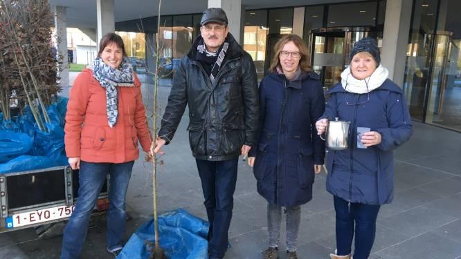 Torhout deelt opnieuw honderd bomen uit, zo kan je bestellen