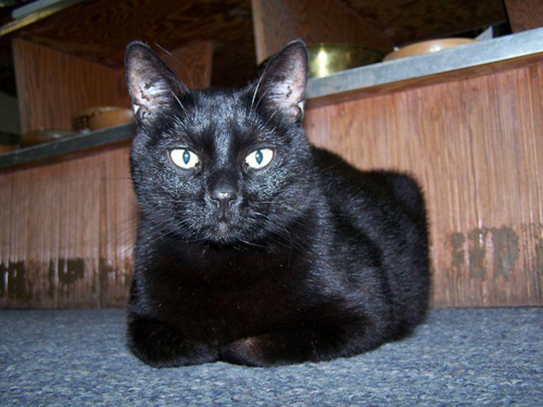Een zwarte kat die je pad kruist, betekent ook onheil, althans dat wil het volksgeloof. Foto malagent/Flickr.com cc Beeld