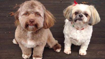 """Fascinerend: """"Deze hond heeft het gezicht van een mens"""""""