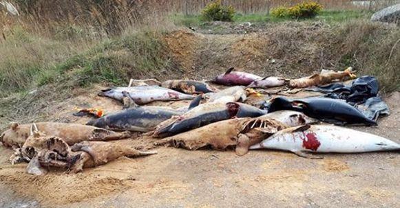 Sea Shepherd ontdekte vorige week een hoop kadavers van aangespoelde dolfijnen in Les Sables d'Olonne.