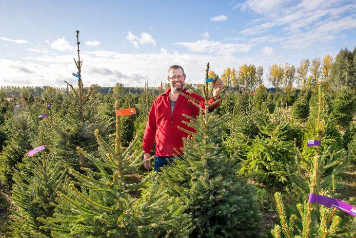 """Kweker Hans van de Laar begint volgende week met rooien van zijn kerstbomen voor de verkoop. ,,Ik vind het wel een mooie gedachte: dat we als kwekers meehelpen om de rottigheid van deze tijd even te vergeten."""""""