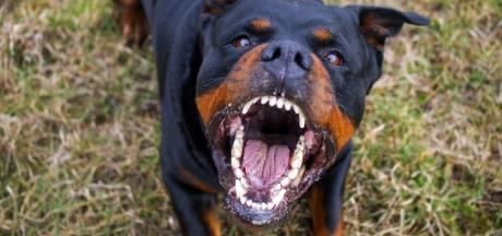Mag hond die drie kinderen beet in Nieuwegein blijven leven?