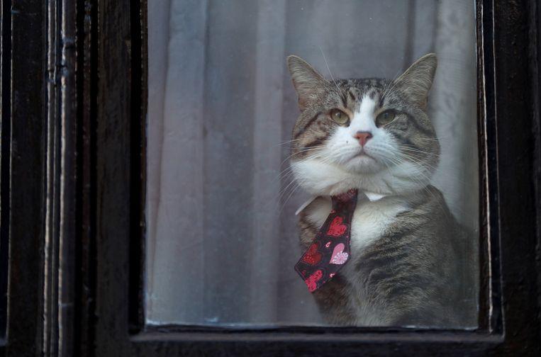 De kat van Julian Assange.