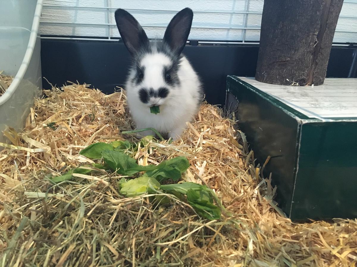 Weeskonijntje Vlekkie, gevonden in de achtertuin, heeft een nieuw thuis gekregen bij Caroline en haar gezin.