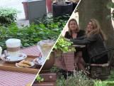 Vriendinnen testen terrasjes in Breda voor de lol: 'Op zoek naar de echte parels'