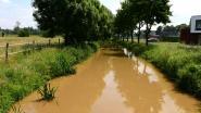 Vorig jaar gifgroen, nu modderig bruin: Wat is er aan de hand met de Markrivier?