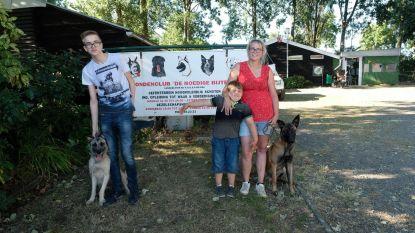 """""""Getrainde hond maakt meer kans op adoptie"""""""
