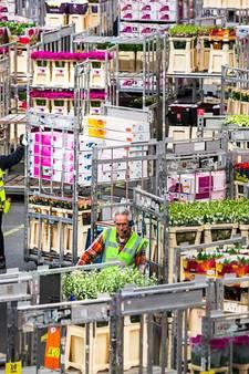 Tulpen en kaas te duur voor Britten