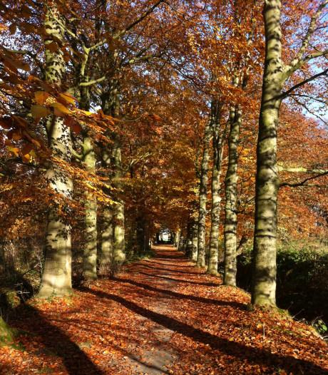 Nieuwe sloot en beter pad moeten schilderachtige Rode Beukenlaan in Park Schothorst redden