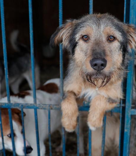 Trois femmes se noient en tentant de sauver des chiens d'un refuge innondé