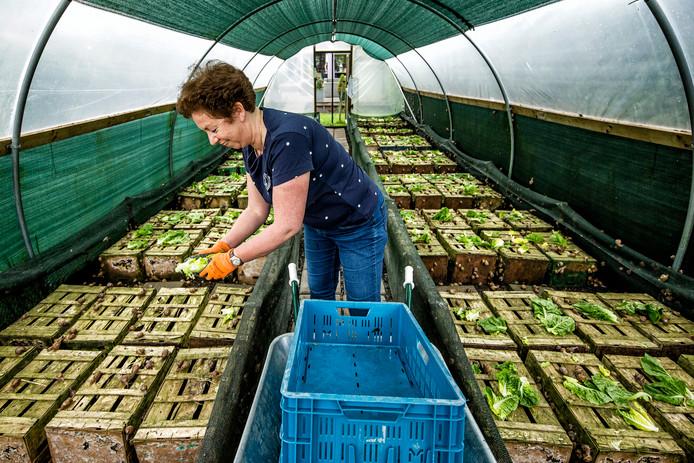 Irma Bunschoten uit Leimuiden is vorig jaar de slakkenkwekerij Escargot & Zo begonnen