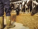 LTO: 'Wageningen is te ver weg komen staan van de boer'