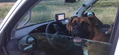 Ontsnapte hond Cooper maakt spoedrit in politiebus