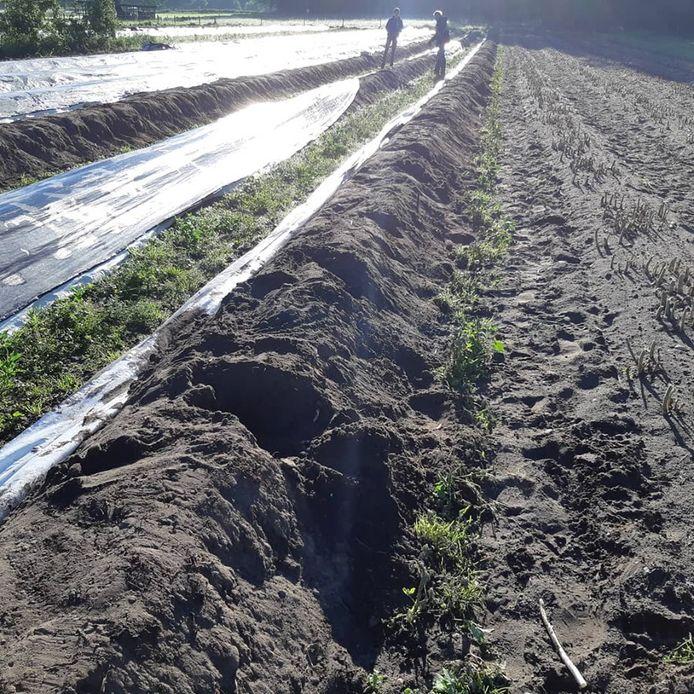 Vernielingen aangericht bij een aspergeboer.