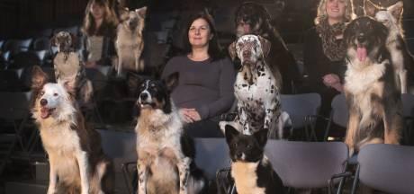 """Emmenez votre chien voir les 101 Dalmatiens: ce ciné carolo propose des séances """"dog friendly"""""""