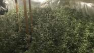 Cannabisplantage met 500 planten opgerold in Veurne