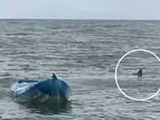 Vader redt tienerdochter op het nippertje uit kaken grote witte haai