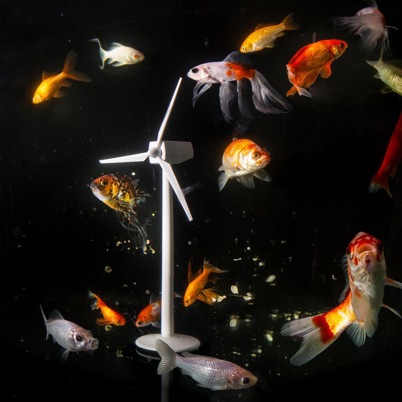 Vissen overleven beter tussen windmolenparken op zee. Beeld Pauline Marie Niks