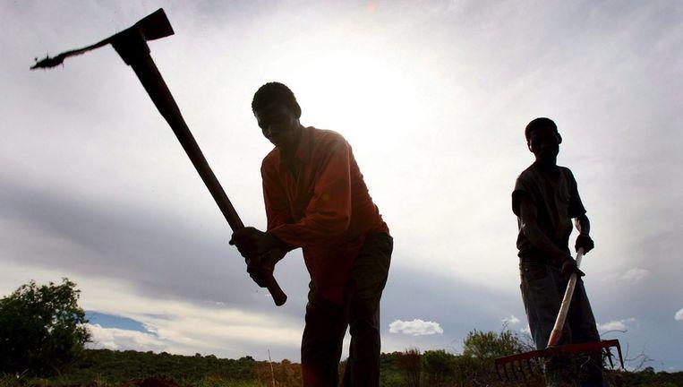 Afrikaanse boeren op het land Beeld ANP