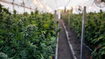 Buren voor rechtbank wegens opzetten cannabisplantage