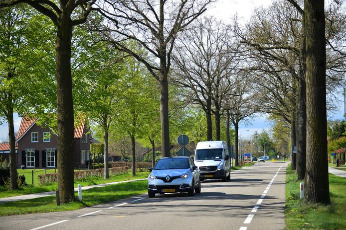 De Beerseweg in Diessen. De bomen langs de weg worden gekapt en op grotere afstand van de rijbaan herplant.