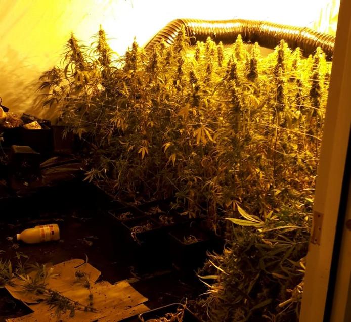 Om hoeveel plantjes het ging, vermeldt de politie Brummen niet in de berichtgeving over de hennepkwekerij in Eerbeek.