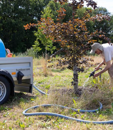 Alles om te voorkomen dat het blad verbrandt in het Levensbomenbos in Rosmalen
