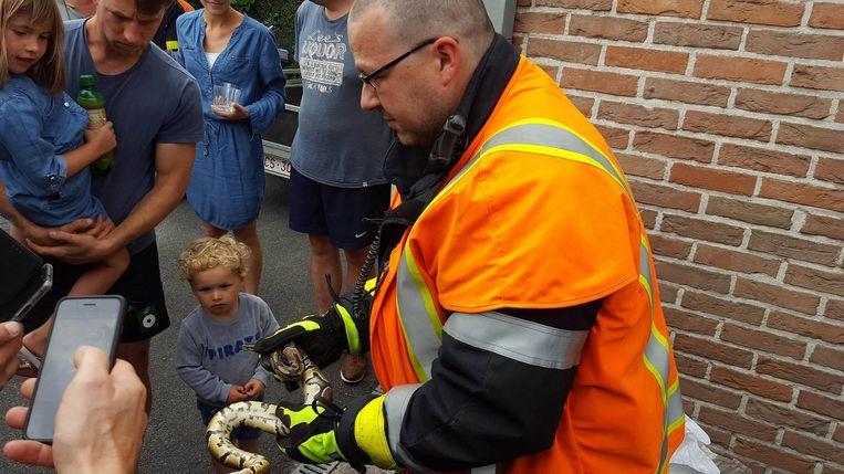 Brandweerman Davy Vanhoutte toont de koningspython aan enkele volwassenen en kinderen.