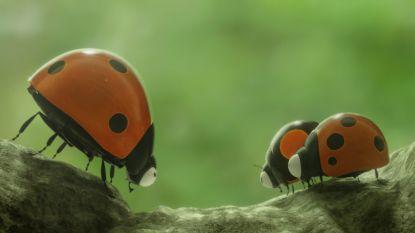 CC De Steiger vertoont animatiefilm 'Minuscule 2: Het Tropisch Avontuur'
