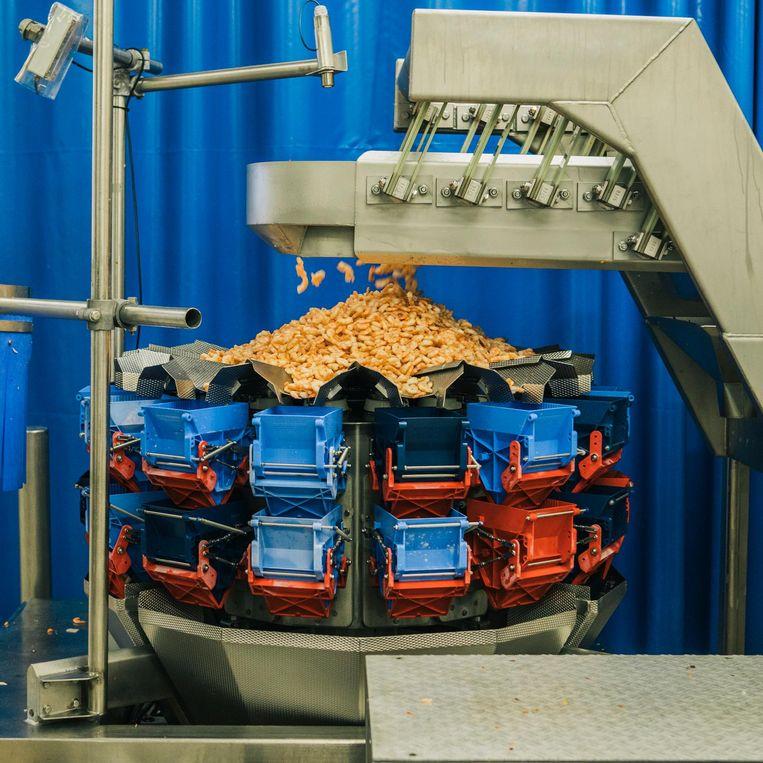 Verwerking van garnalen in fabriek Klaas Puul Beeld Marcel Wogram