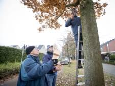 Haaksbergse wijk gaat 'jeukrups' bestrijden met koolmezen en wespen