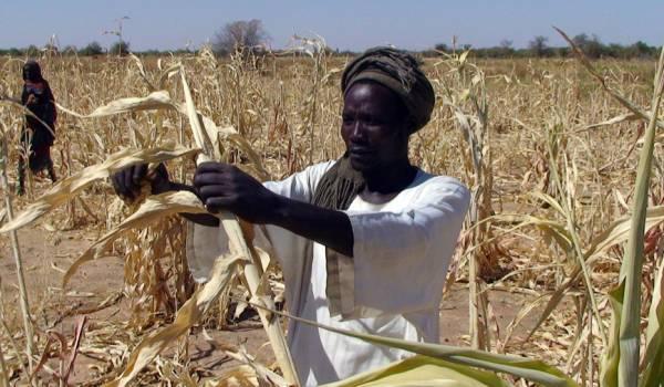 Hoe kan het inkomen van arme boeren in ontwikkelingslanden wél stijgen?