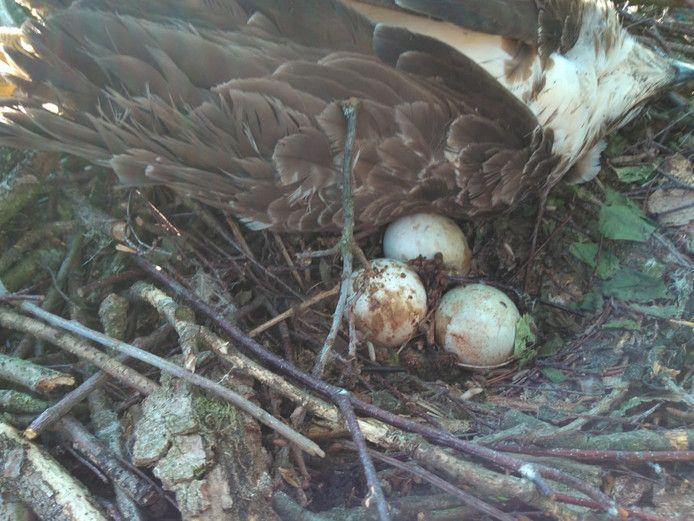 Een van de dieren stierf broedend op haar nest.