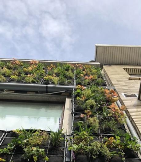 Une façade qui économise l'eau ? C'est possible avec le jardin mural