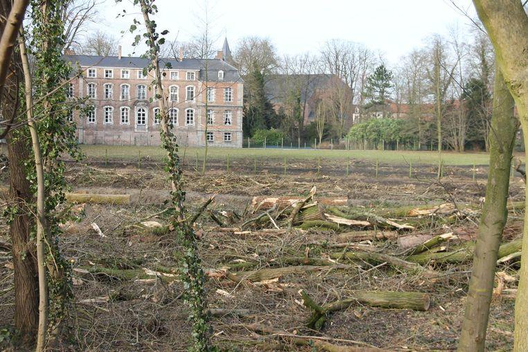 Een deel van de gerooide bomen in het kasteelpark.