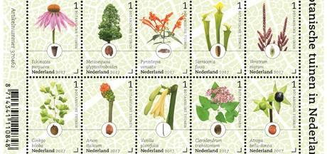 Kansenboom van Arboretum in De Lutte op postzegelvel PostNL