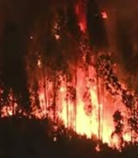 Portugese minister van Binnenlandse Zaken weg om dodelijke branden