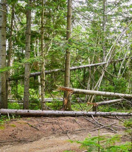 Un nourrisson décède suite à la chute d'une branche en pleine forêt, sa mère dans le coma