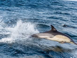 Vissers doden (bedreigde) dolfijnen en zeehonden om ze te gebruiken als aas