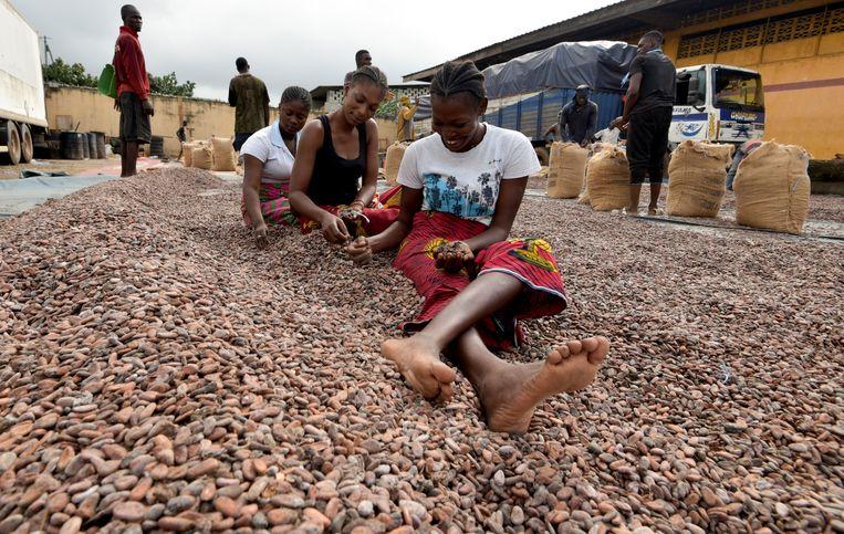 Vrouwen sorteren cacaobonen in Ivoorkust. Door het toegenomen vakmanschap is de productiviteit per hectare enorm gestegen.  Beeld AFP